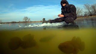 НАДЕРБАНИЛ КУЧУ СТРАШНОЙ РЫБЫ Атака РОТАНА подводная съемка Заготовил живца на зиму