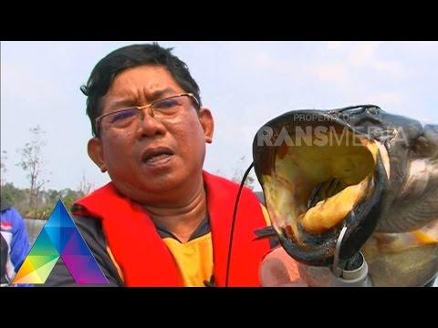 MANCING MANIA - Berburu Snakehead Ke Kalimantan Selatan 3-1