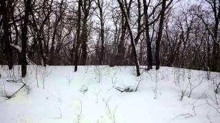 Weimaraner In The Snow