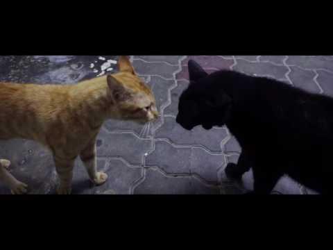 Isteri kucing gaduh marah suami kucing