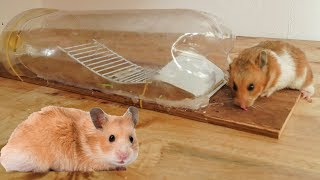 Mouse Trap Technology - Testing By Cute Hamster - How to make human mouse trap DIY