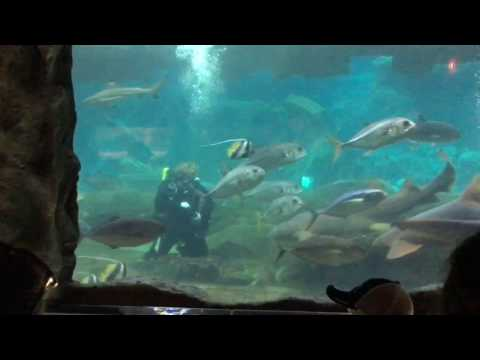 Under the sea life in West Edmonton Mall 2016 P4