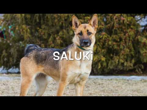 Robin & Saluki