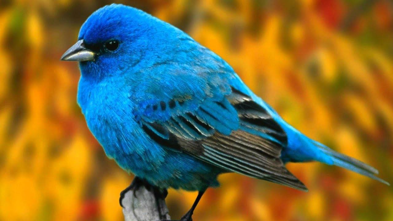 Bird amp Bird Deutsch  Bird amp Bird  International Law Firm