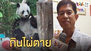 """ทุบโต๊ะข่าว:จีนจวกไทยให้""""ช่วงช่วง""""กินไผ่แก่เลยตาย-จนท.แจงหมีฉลาดเลือก แถมมีกูรูจีนคัดสรร19/09/62"""
