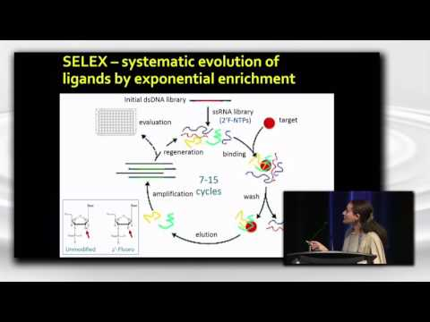 Aptamers and SELEX: The Past, The Present, and The Future