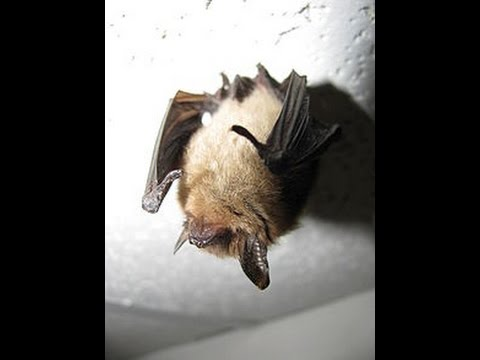 Webinar: Fire and the Northern Long-Eared Bat