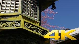 Shizuoka Shuzenji Temple - 福地山 修禅寺 - 4K Ultra HD