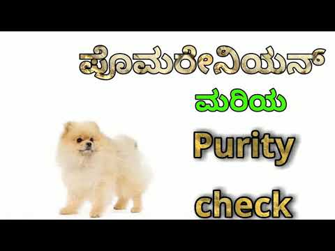 How to check purity of Pomeranian purity in kannada