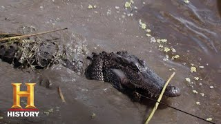 Swamp People: BIG GATORS Are Why Edgars Hunt (Season 8)   History