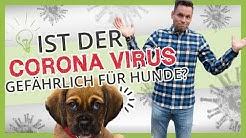 Coronavirus gefährlich für Hunde? Kann ich mich über Hunde infizieren?