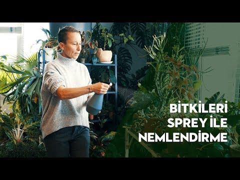 Bitkileri Sprey ile Nemlendirme Nedir ve Nasıl Yapılmalıdır? - Labofem