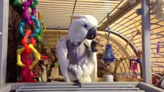 Cockatoo cork love