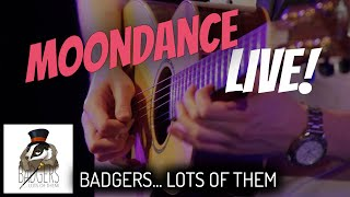 Moondance [Van Morrison] // Badgers... Lots Of Them // LIVE COVER
