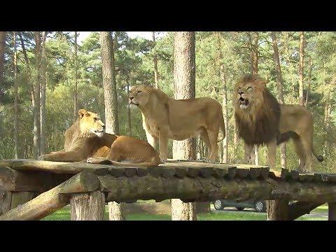 Wilde Tiere hautnah im Serengeti Park Hodenhagen