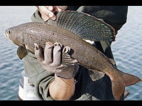 рыбалка на хариуса в забайкальском крае