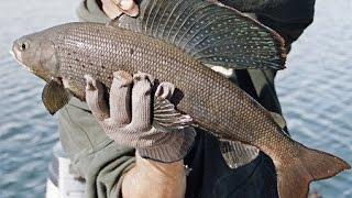 Рыбалка в Забайкалье. Хариус речки Калар.