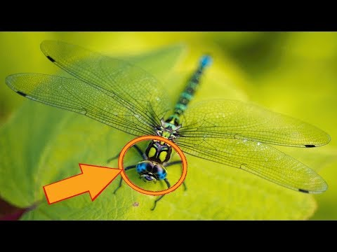 If You're Someone Who Often Spots Dragonflies, The Universe May Be Sending You An Important Message