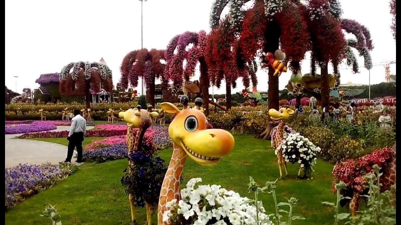 Beautiful flowers at Miracle Garden Dubai 7/4/2018 | silisili - YouTube