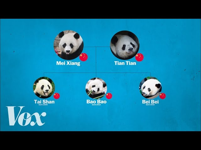 China's panda diplomacy, explained