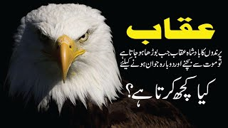 Eagle Life Cycle And Survival | Rebirth Of Eagle | Inspiring Eagle Life Story In Urdu/Hindi