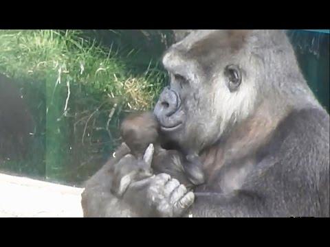 Mamas del Zoo Aquarium de Madrid - Tribute to moms of the Zoo at Madrid