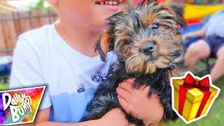 Birthday Puppy Surprise! 🎁