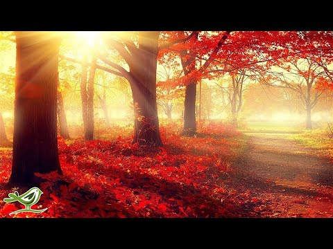 Mix - Relaxing-sounds-101-relaxing-mindfulness-meditation-relaxation-maestro