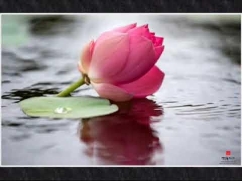 [Karaoke] Con về chùa - Thanh Trì Nhạc phật giáo chế lời