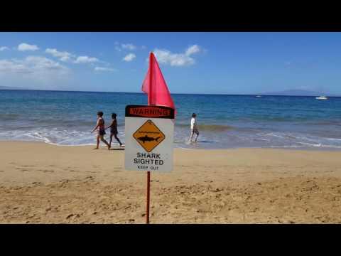 November 15, 2016 Shark Attack Maui Hawaii USA