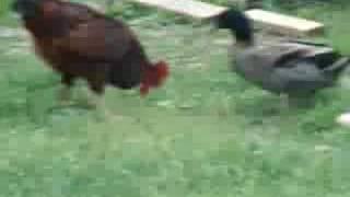[518.32 KB] Duck Attacks Roster
