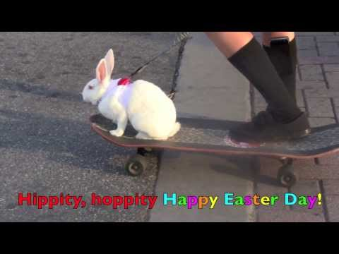Here Comes Peter Cottontail   NURSERY RHYME  Children's Song for EASTER