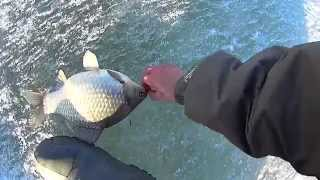 Ловля крупного карася на мелководье по последнему льду