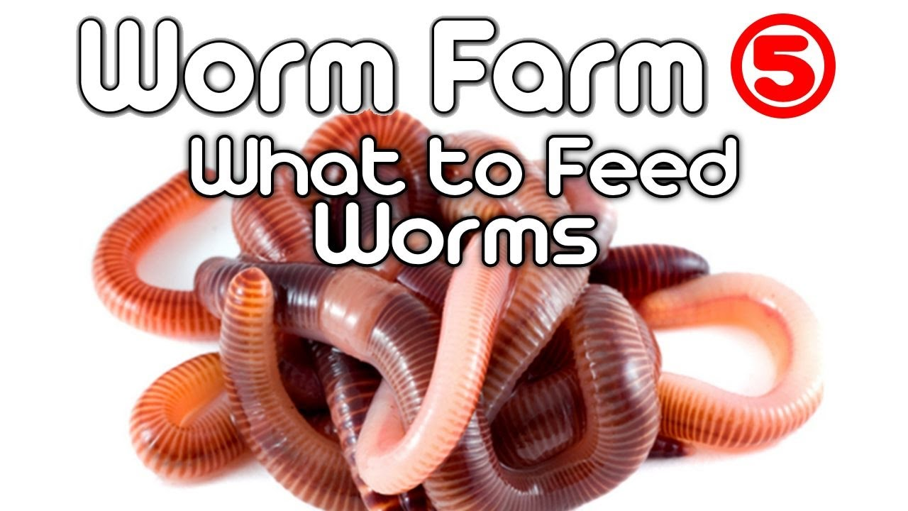 worm farm 5 what to feed worms youtube