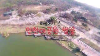 [드론][벚꽃]하늘에서 본 핑크빛 물결 인천대공원 벚꽃