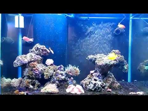 Update of the 65 gallon reef tank.