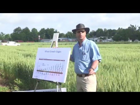 UKREC Wheat Field Day 2016 - Presentations from Edwin Ritchey, Phil Needham & Don Halcomb