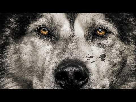 Sad Piano Music - Old Wolf (Original Composition)