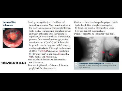 Gram-Negative Bacteria [USMLE High-Yield Topics]