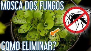 Como eliminar FUNGUS GNATS de suculentas e plantas diversas