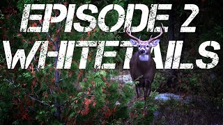 SEASON 3 EPISODE 2 - CHASING WHITETAILS | HOW TO MAKE VENISON STOCK