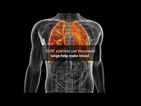 Inside the Lungs: Making Blood