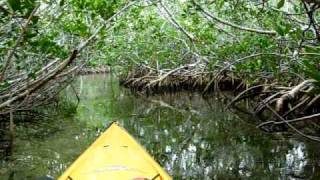 "Kayaking the Mangrove ""Tunnel"" near Tavernier, FL"