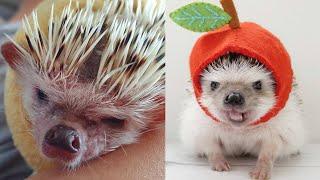 ПРИКОЛЫ - ЛУЧШИЕ ПРИКОЛЫ - СМЕШНЫЕ ЖИВОТНЫЕ 2020 - ФЕЙЛЫ 2020 (СМЕШНАЯ ОЗВУЧКА) Hamsters like #316