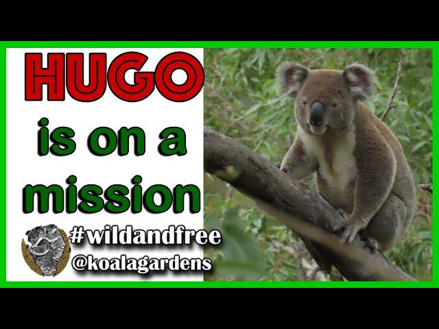 Hugo is on a mission