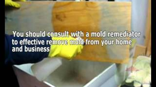 Molds Are Fungi