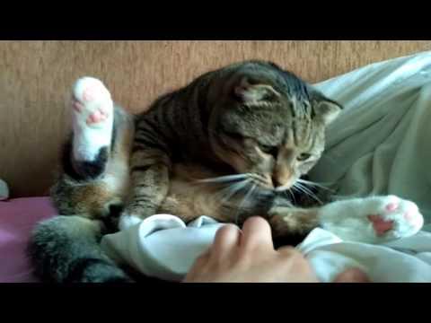Кот лижет яйца, которых нет
