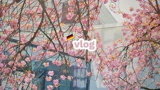 vlog. 빅토리아 케이크. 독일벚꽃. 아디다스 언박싱…
