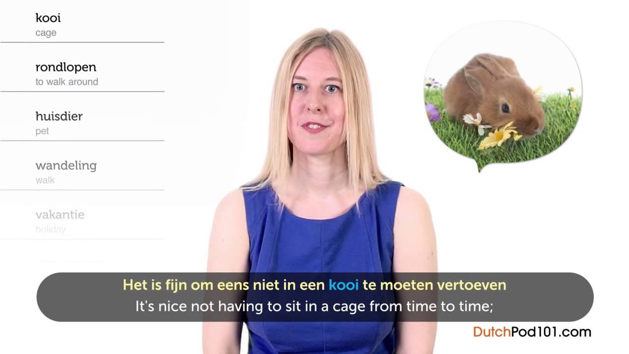 Dutch Holidays - World Animal Day - Wereldierendag