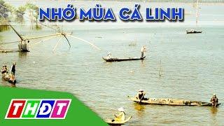 Ký ức miền quê: Nhớ mùa cá linh | THDT